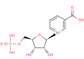 Picture of nicotinic acid mononucleotide (click for magnification)