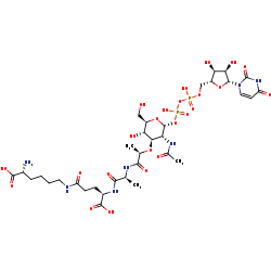 Picture of UDP-N-acetylmuramoyl-L-alanyl-D-glutamyl-D-lysine (click for magnification)