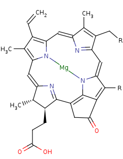 Picture of a 3-vinyl bacteriochlorophyllide d (click for magnification)