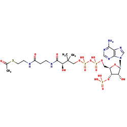 Picture of acetyl-CoA (click for magnification)