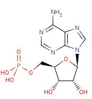Picture of adenosine 5'-monophosphate (click for magnification)