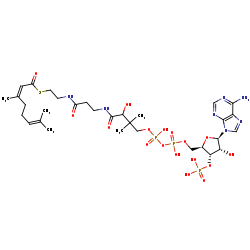 Picture of cis-geranyl-CoA (click for magnification)