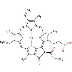 Picture of divinyl protochlorophyllide a (click for magnification)